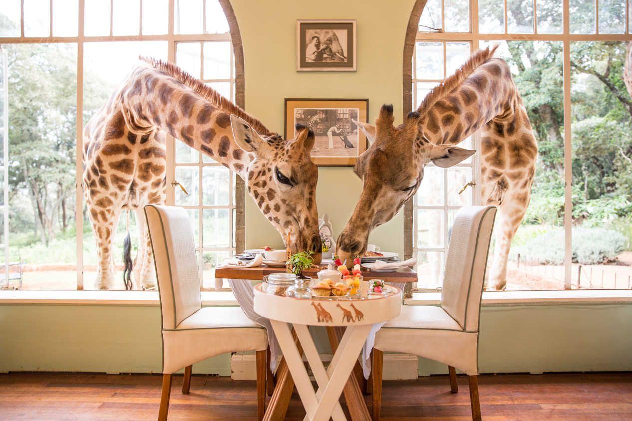 migliori siti di incontri per gli amanti degli animali
