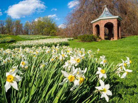 Natural landscape, Flower, Snowdrop, Spring, Grass, Meadow, Plant, Narcissus, Wildflower, Daisy,