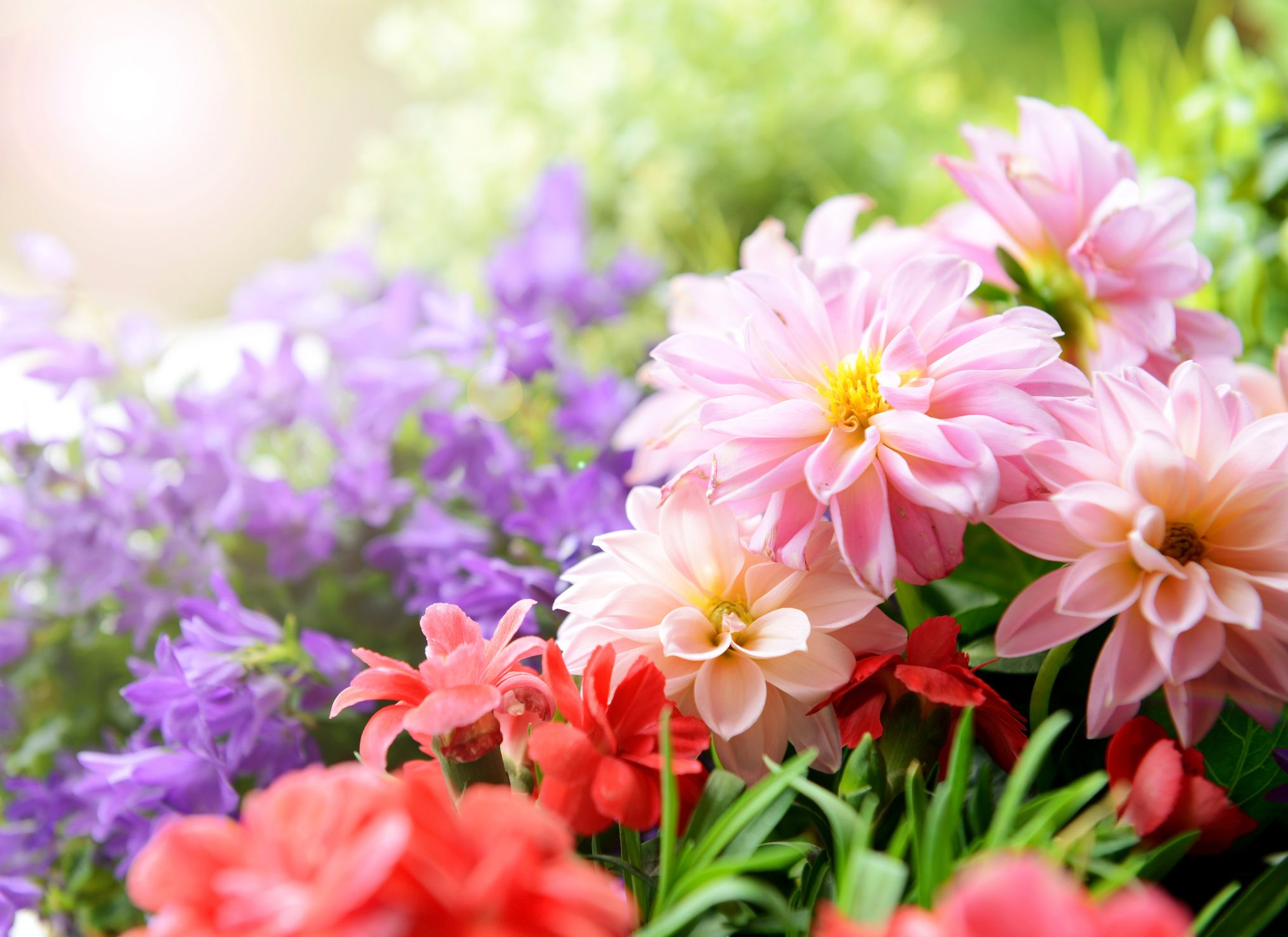 How to create a flower garden that blooms all year