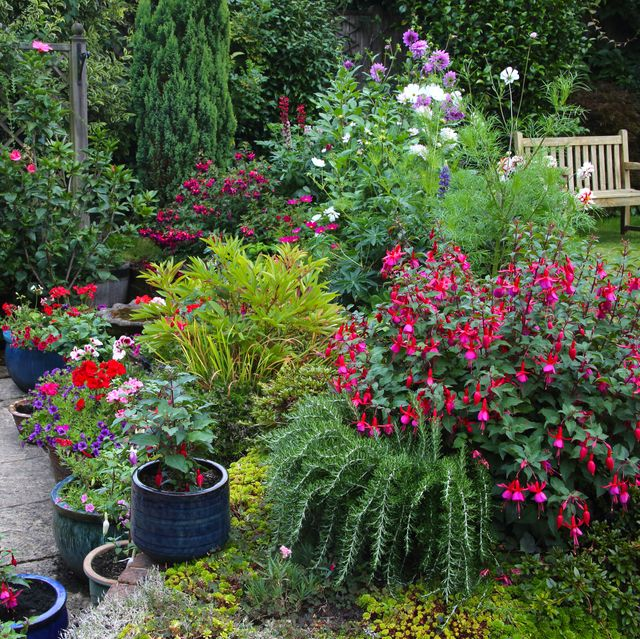 bright flowers in english garden with patio pots  flowerbeds