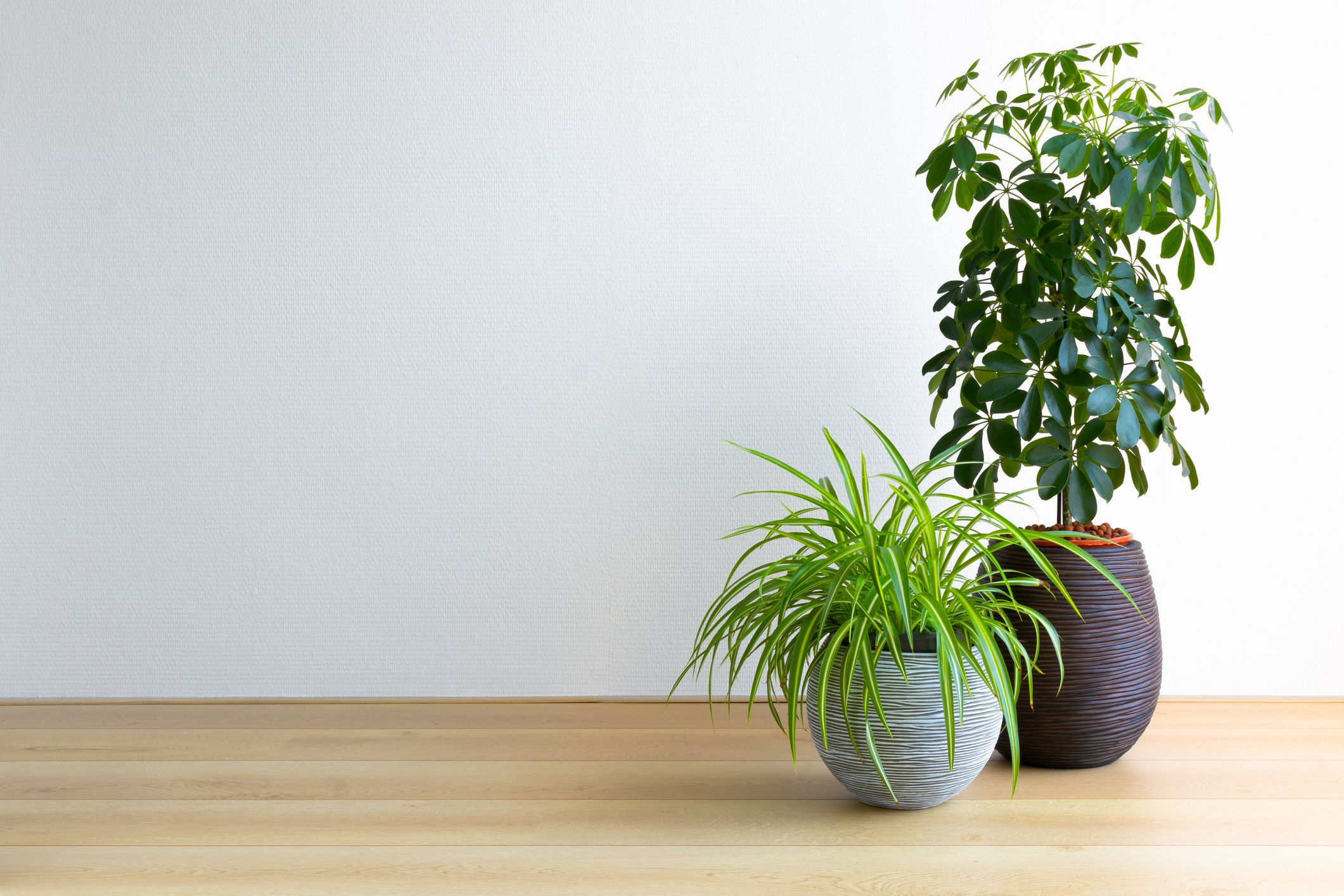 Houseplants do not clean the air in our homes, new study reveals
