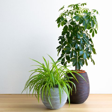 Houseplants Might Not Actually Be Impacting Our Air Quality