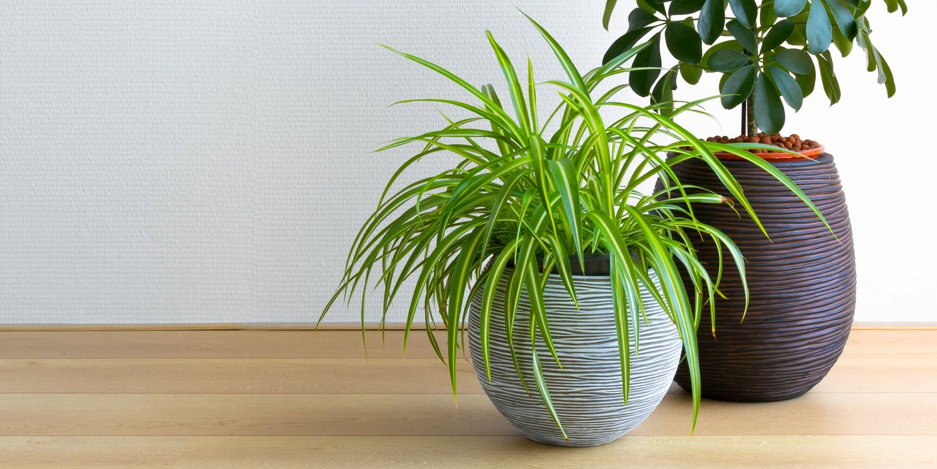 These houseplants can prevent dry winter skin, according to the RHS