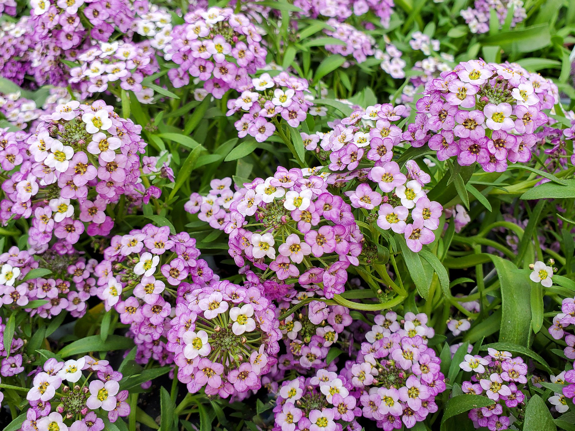 20 Best Ground Cover Plants And Flowers Low Maintenance Ground Covers To Prevent Weeds