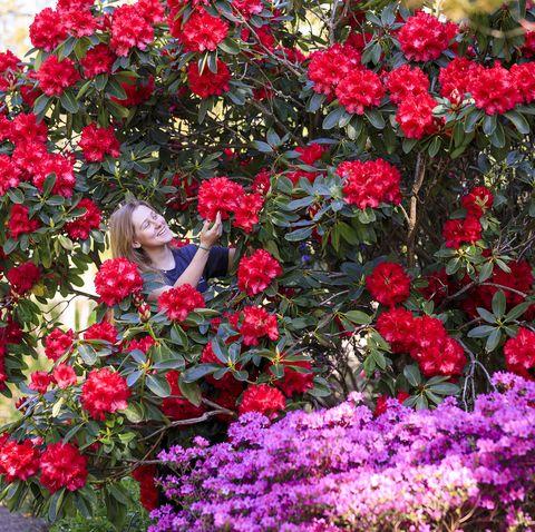 britain's gardens in bloom