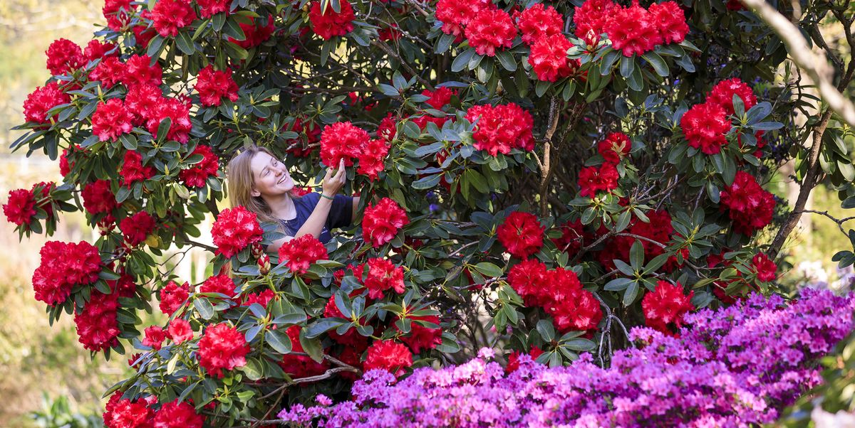 Britain's gorgeous gardens are in full bloom. Here are all the photos you need to see