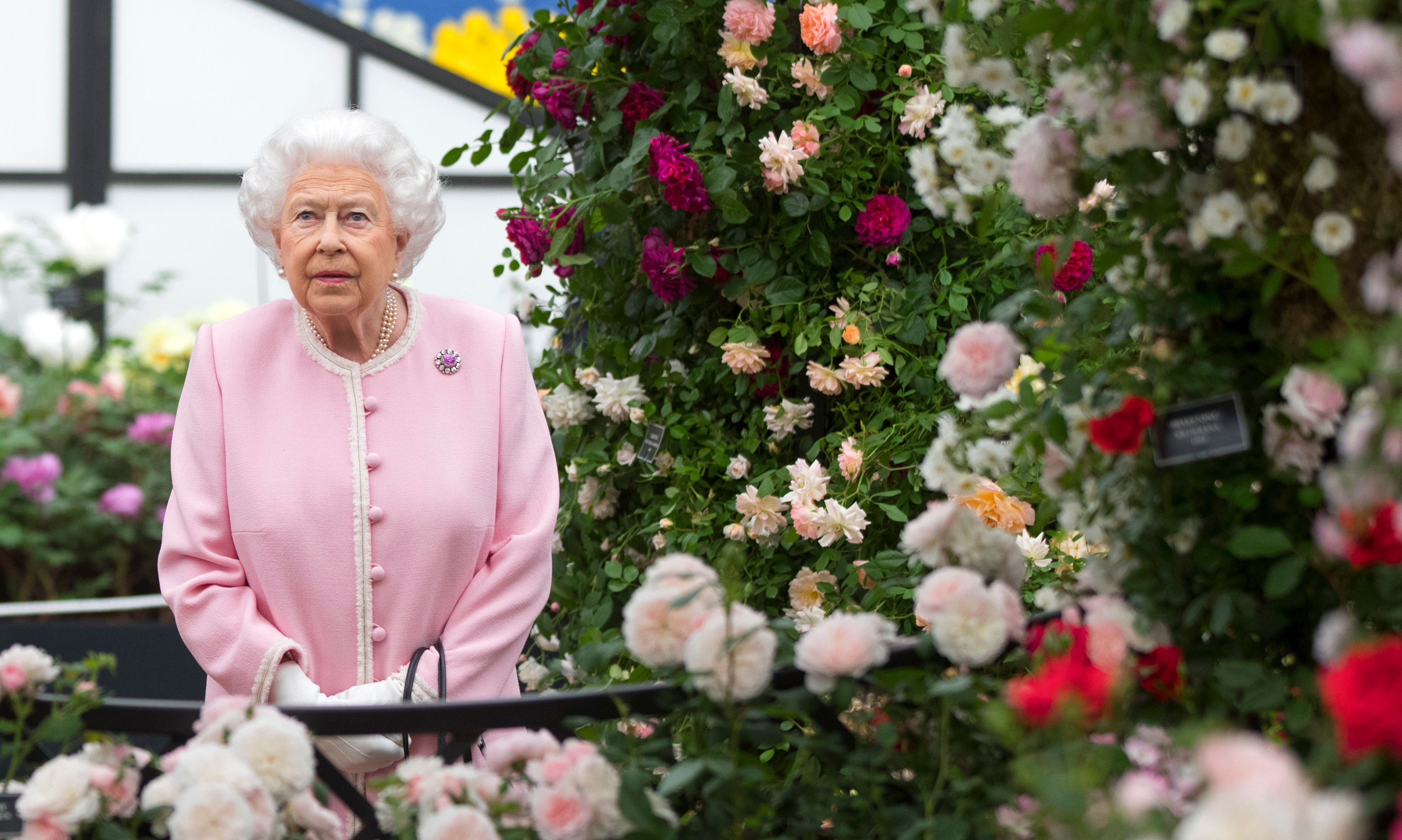 Chelsea Flower Show opens online for the first time