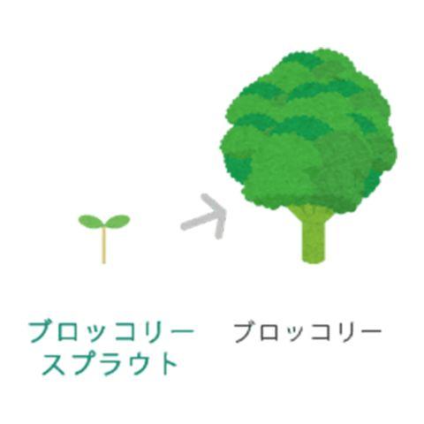 Green, Logo, Leaf, Tree, Arbor day, Graphics, Plant,