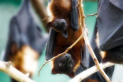 Find out what bats live nearby.