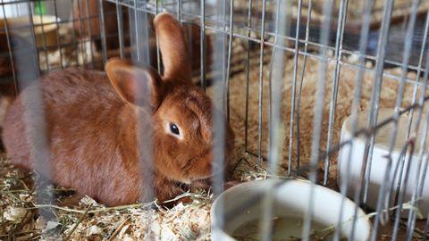 konijn in een hokje