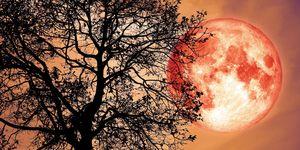 full strawberry moon june astrology
