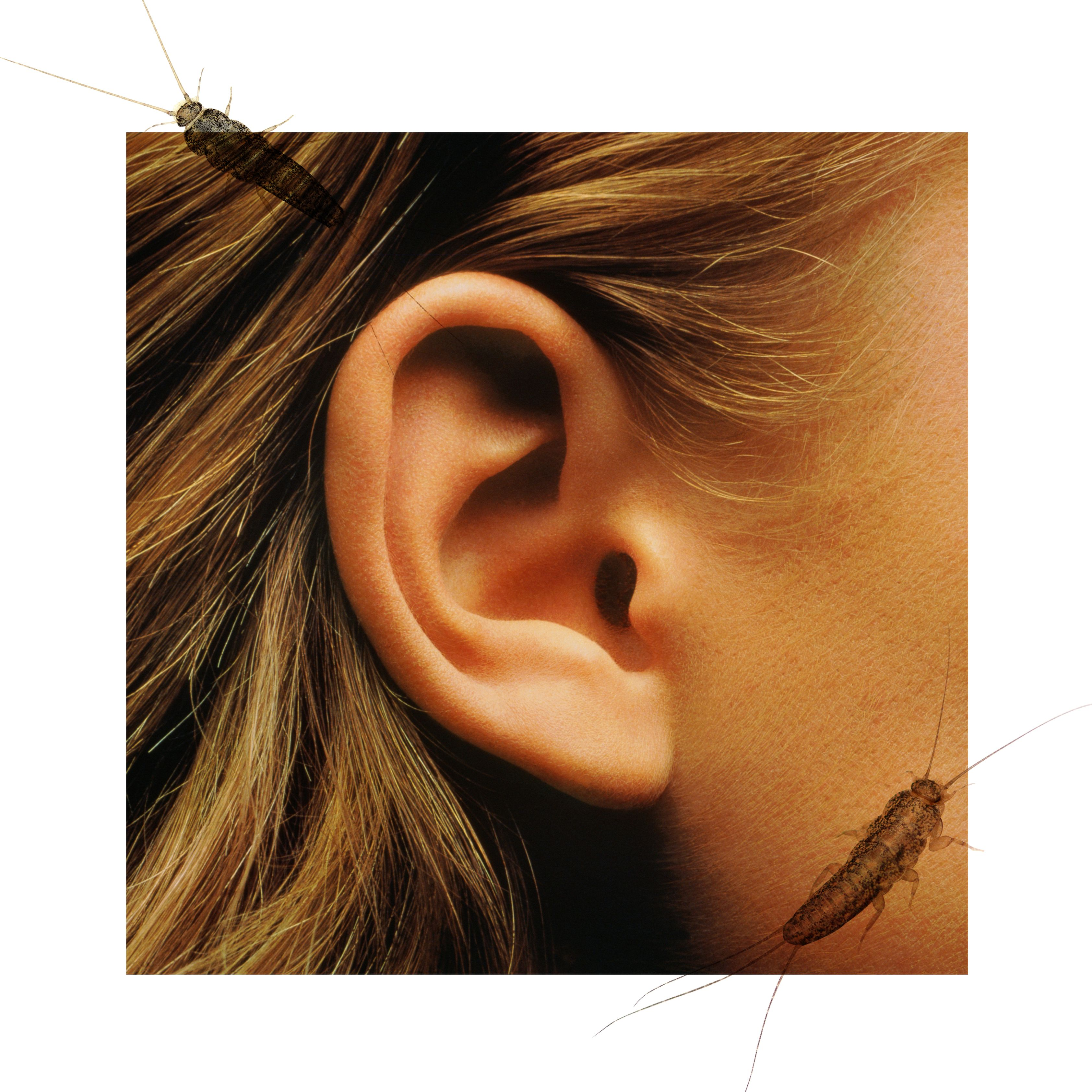 Forum on this topic: 1,877 pierced ears show why healthcare is , 1-877-pierced-ears-show-why-healthcare-is/