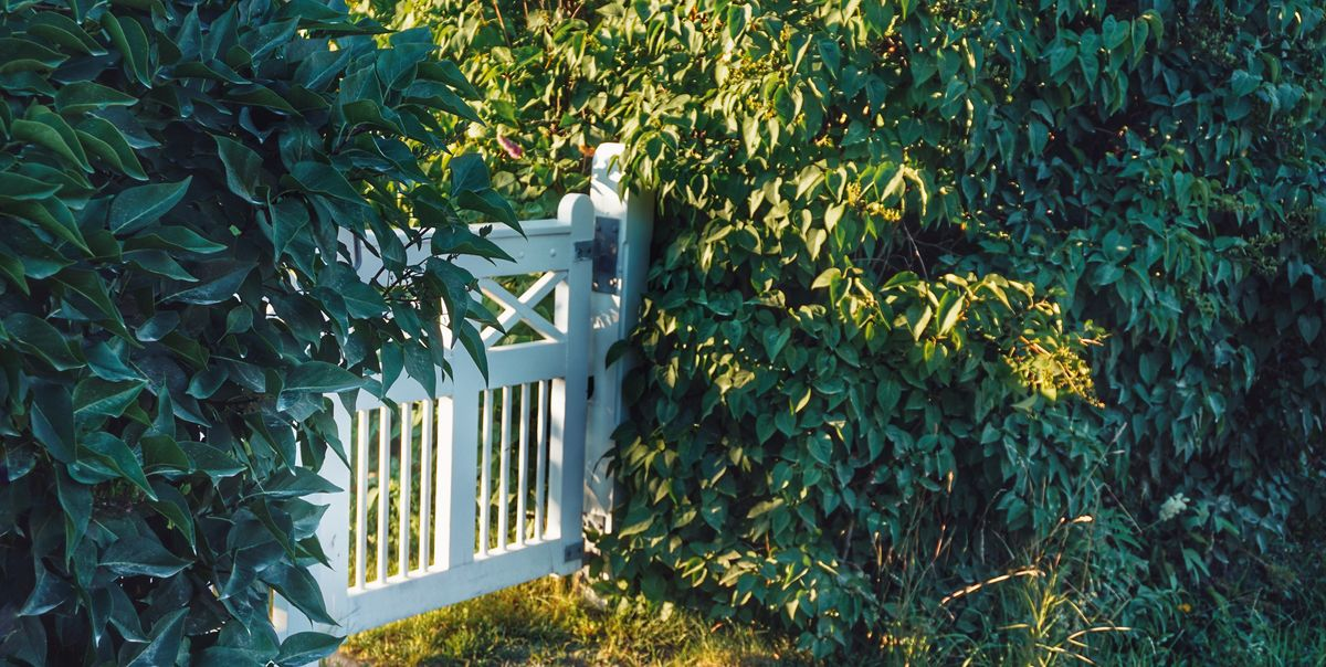 5 simple ways to keep your garden safe and secure