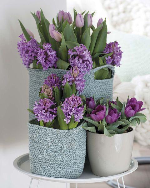 composición de jacintos y tulipanes