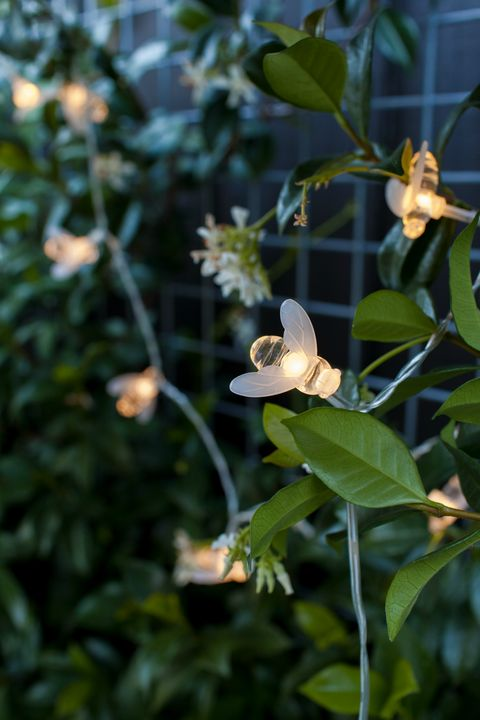 Bumble Bee Solar Fairy Lights