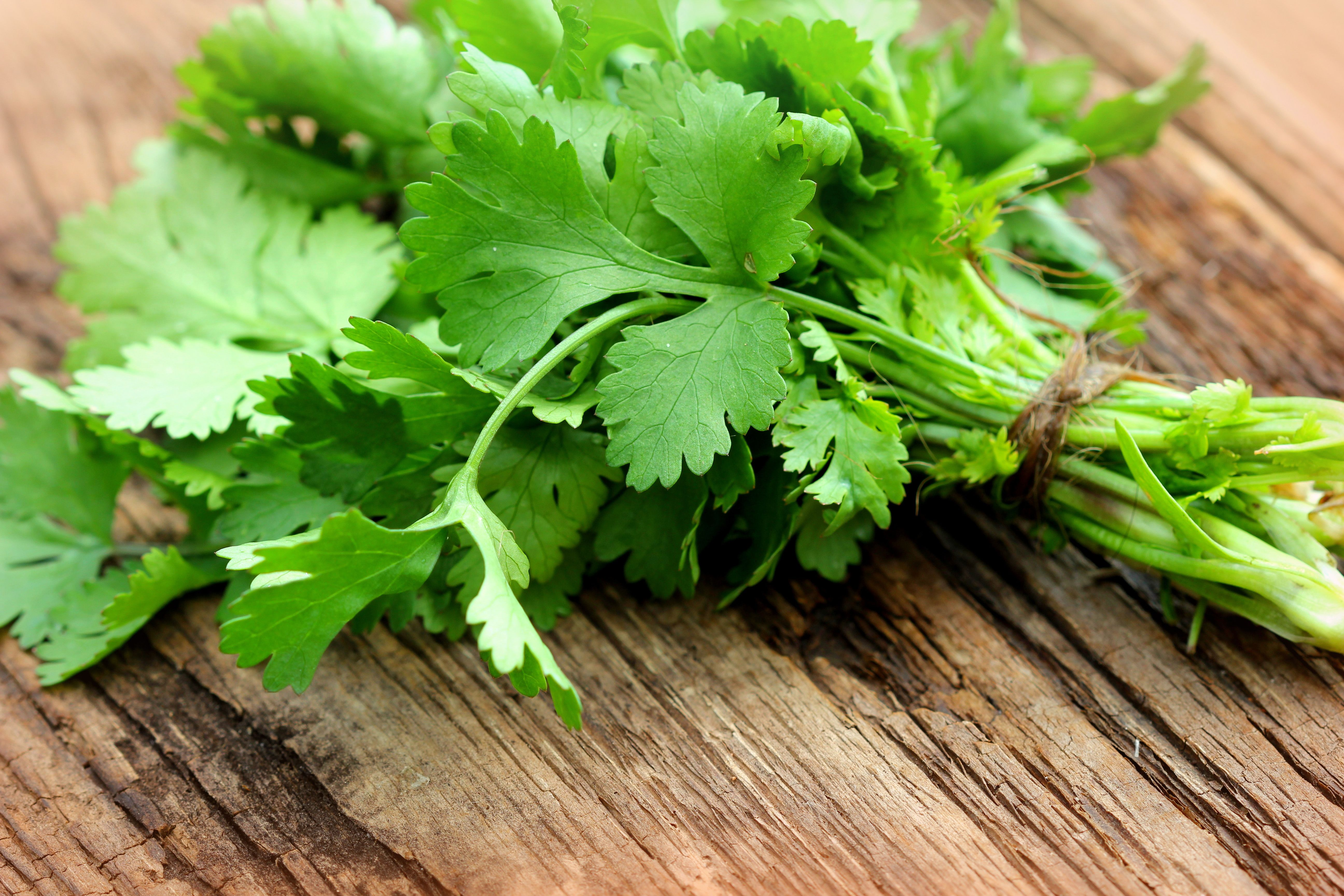 Why Cilantro Tastes Like Soap To Some People