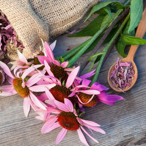 bunch of healing coneflowers and sack with dried echinacea