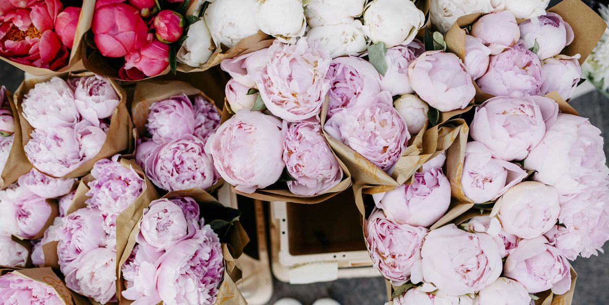 Planting Peonies In Your Yard Could Attract Ants Why You Shouldn