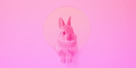 Pink, Rabbit, Rabbits and Hares, Magenta, Illustration, Domestic rabbit,