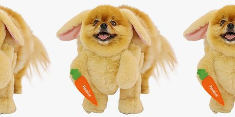 Dress Your Dog Up as the Easter Bunny, and Prepare to Faint from Cuteness