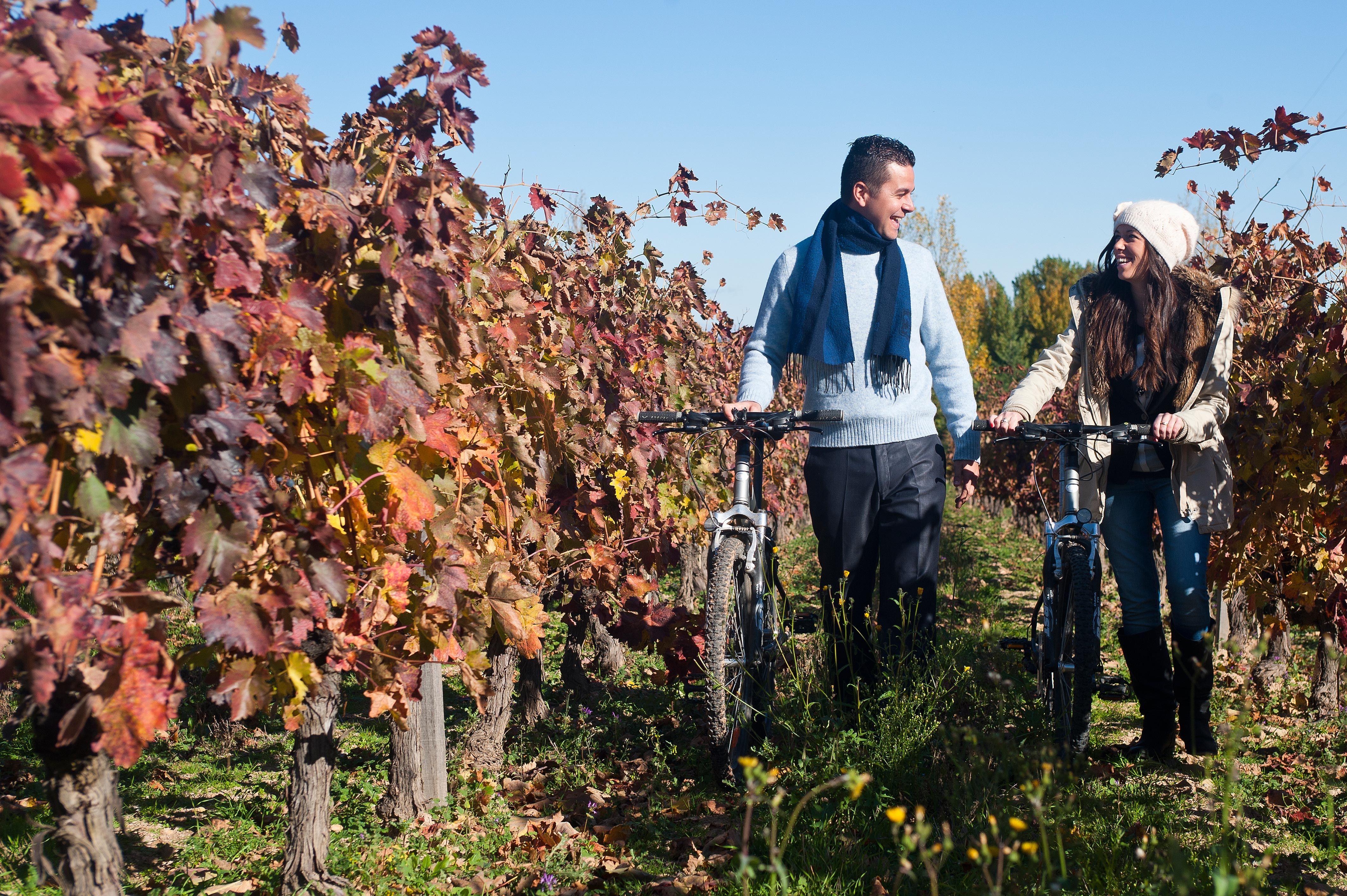 Una pareja en bici por los viñedos de Ribera de Duero en Burgos