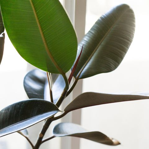 These 5 house plants will actually keep your home cool in a heatwave