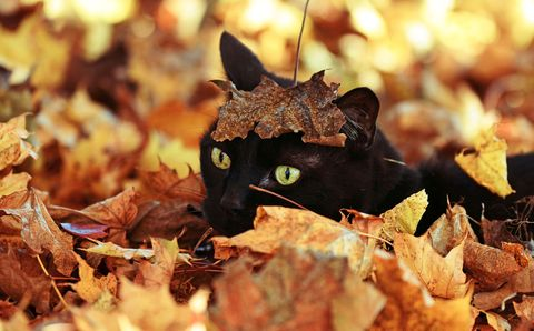 Buried in the Leaves