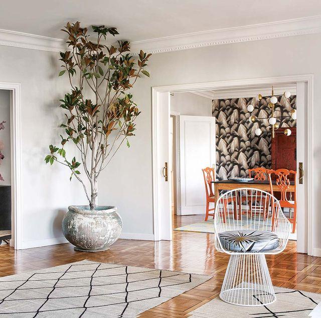 salón con maceta de cerámica y un magnolio