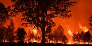 Firefighters Battle Bushfires On The Mid North Coast of NSW