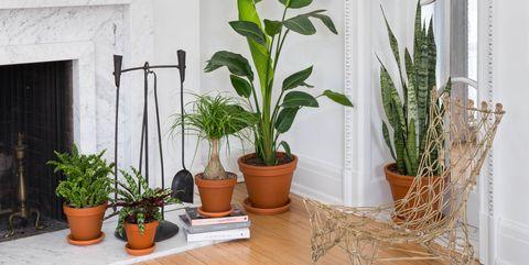 Plants Online