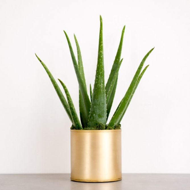 The Best Places To Buy Plants Online — House Plants For Sale