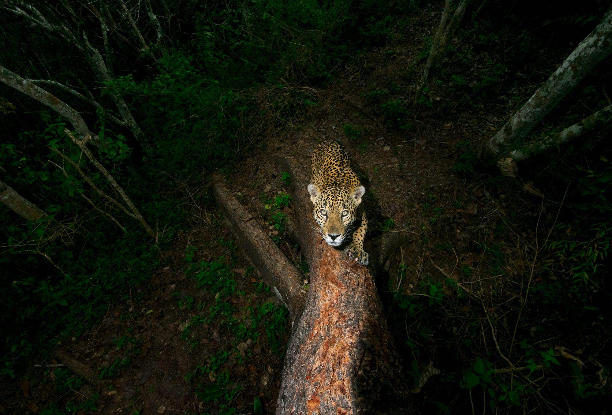 Wildlife photographer of the year 2018 photo