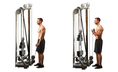 cable bicep curl