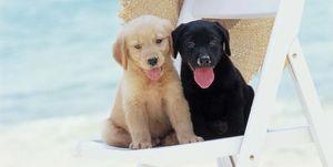 Cachorros en la playa