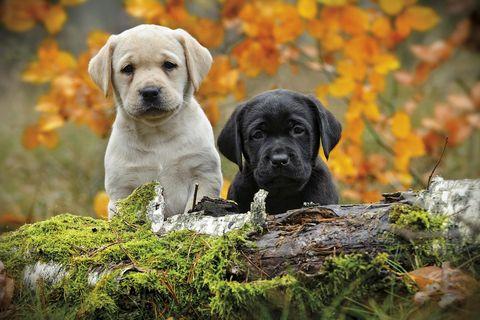 Perros y mascotas: Cachorros en otoño