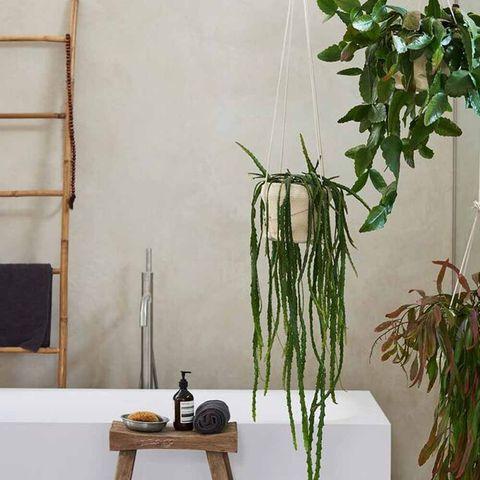 Cactusplant, exotisch, tropisch
