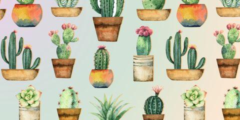 Cactus, Flowerpot, Plant, Botany, Houseplant, Saguaro, Succulent plant, Flower, Prickly pear, Caryophyllales,