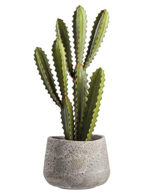 Cactus con maceta de hormigón