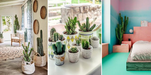 cactus, cuidados, tendencias, decoracion beneficios