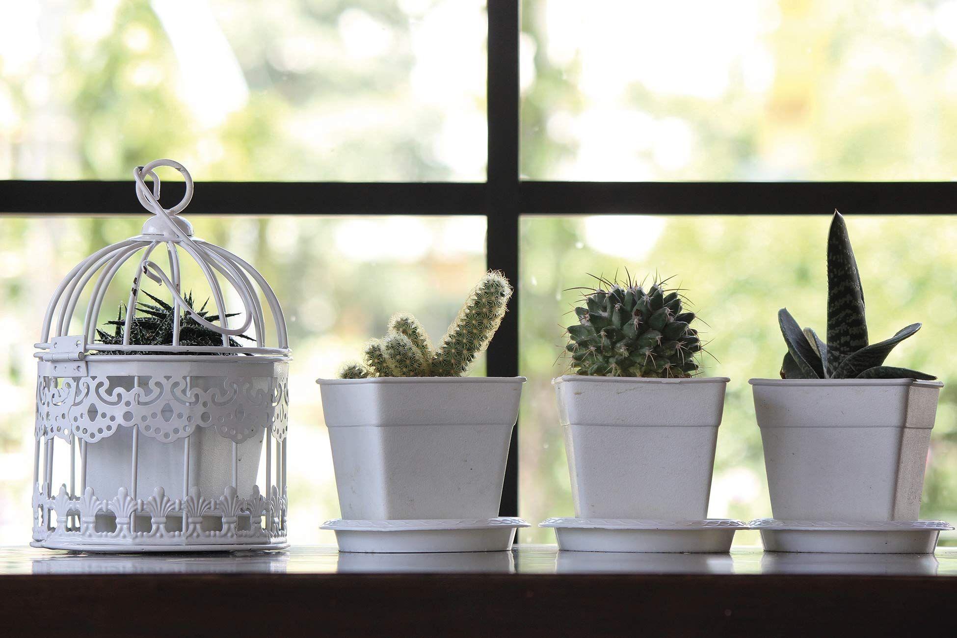 Arvolas Ex/ótico Desierto Cactus Planta de cactus Plantas de interior Estuche port/átil para anteojos Estuche protector para gafas resistentes a la abrasi/ón