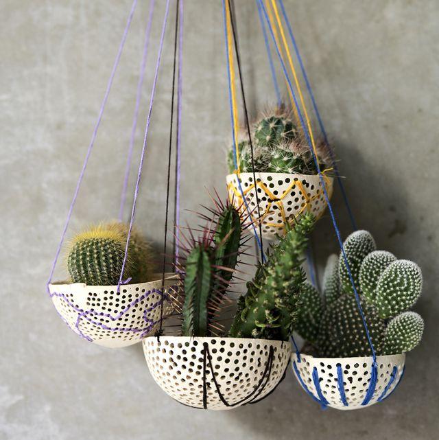 cactus in hanging plant pots