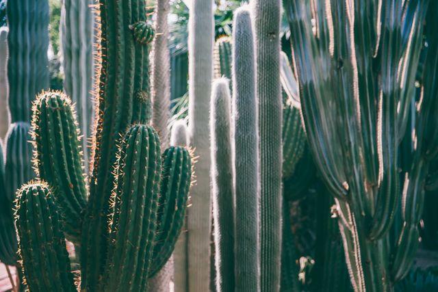 cactus in marrakech