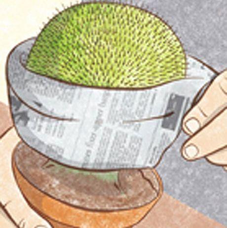 cómo coger los cactus sin pincharte