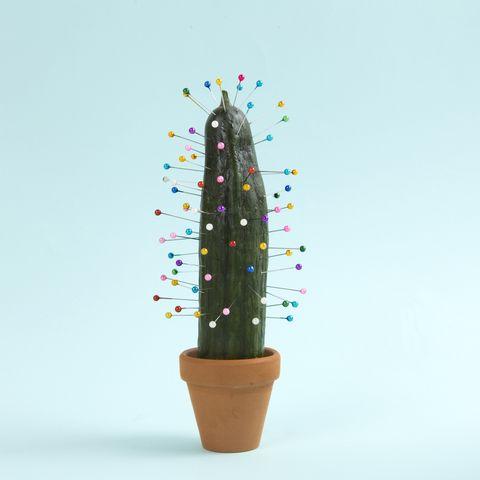 cactus voodoo
