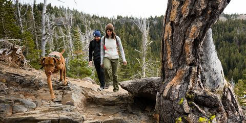 Human, Forest, Trunk, Bedrock, Wilderness, Trail, Adventure, Walking, Old-growth forest, Hiking,