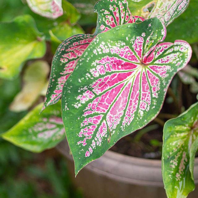 8 of the most valuable houseplants revealed