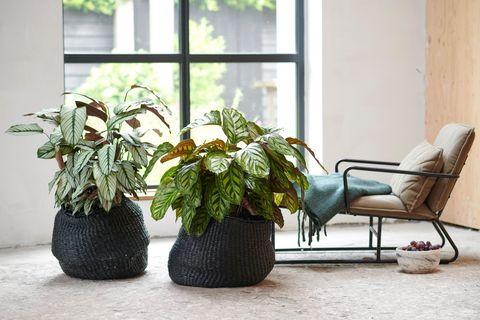 Deze vijf slaapkamerplanten zijn perfect voor in de slaapkamer.