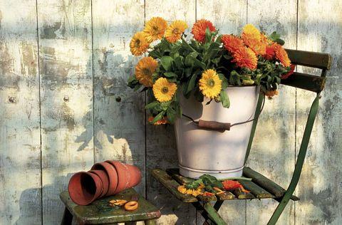 caléndula flores amarillas y naranjas