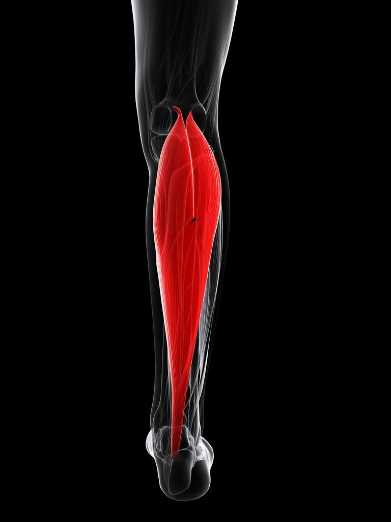 Best Calf Workouts: How To Train For Bigger, Stronger Legs