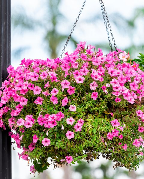 20 Best Hanging Plants Easy
